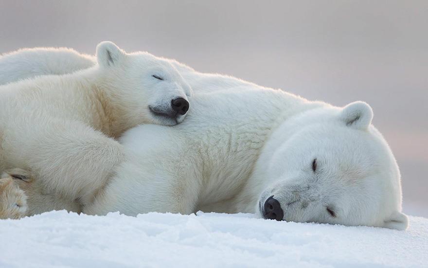 cute-baby-polar-bear-day-photography-35__880