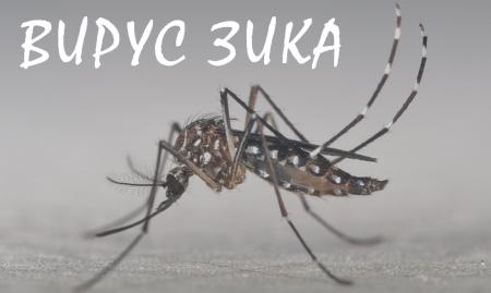вирус зика комар